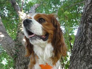 画像 100銀杏の木