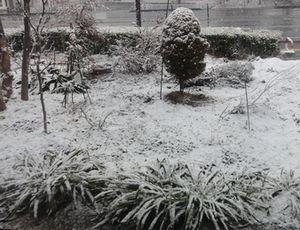 画像 141雪