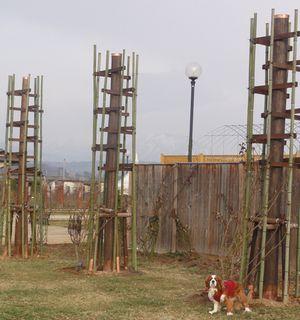 画像 139バラタワー