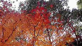 shukusho-P1000504.jpg