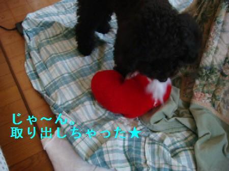 heart5.jpg