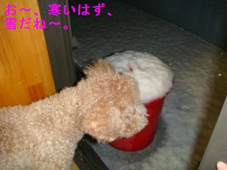 yuki2.jpg