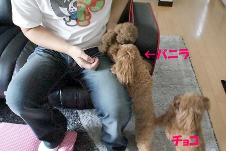 ぬいぐるみ (3)
