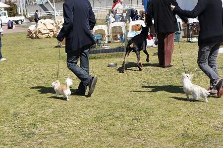 DOG SHOW 017