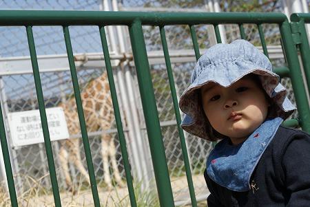 動物園 011