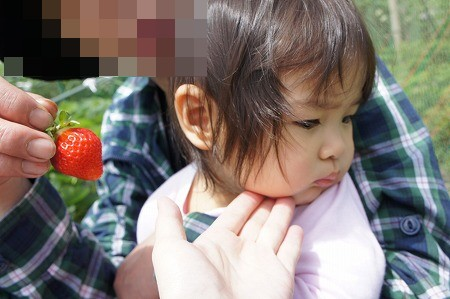 イチゴ狩り 001