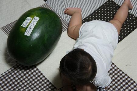 suika_20100817104713.jpg