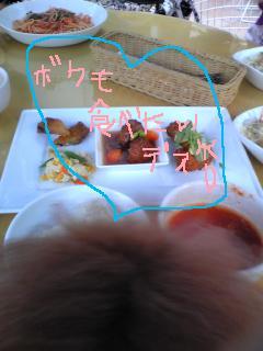 Image383.jpg