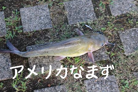 http://blog-imgs-35.fc2.com/c/h/o/chokochoko4649/20110828232506309.png
