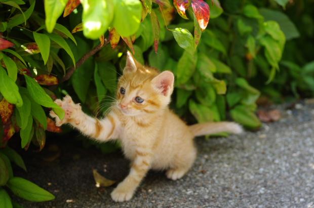 公園の子猫3
