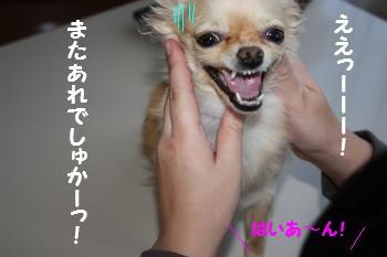 IMG_4555.jpg