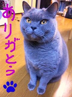 SH3871370001.jpg
