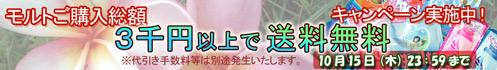モルト 購入金額3千円以上で送料無料キャンペーン