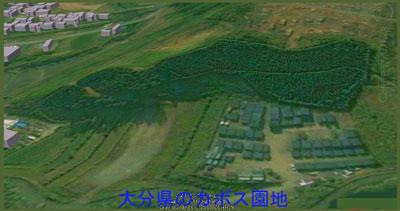 kabosu日田市のカボス園