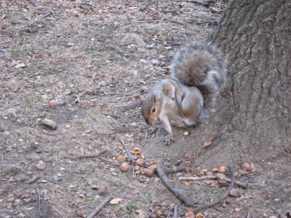 Central Park 011610_2