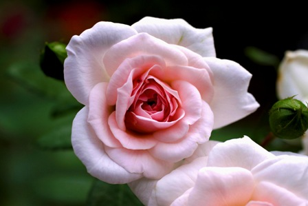 146_rosa20rosa.jpg