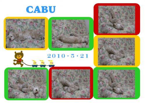 20100521cabu1.jpg