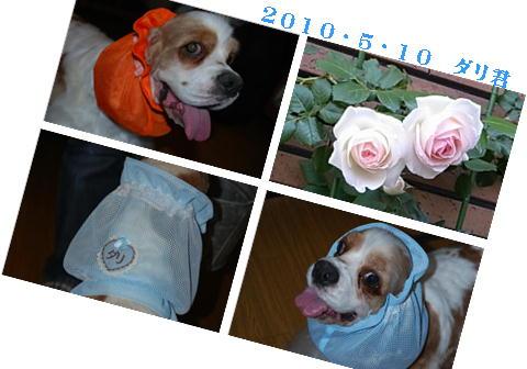 20100521ダリ