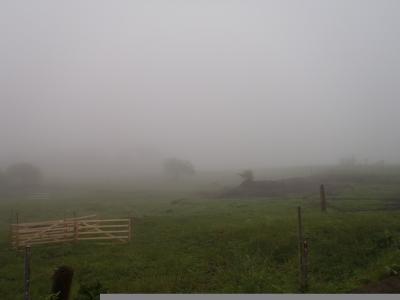 霧で先が見えない