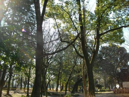 0126公園にて (4)