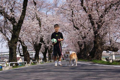0403桜 (2)