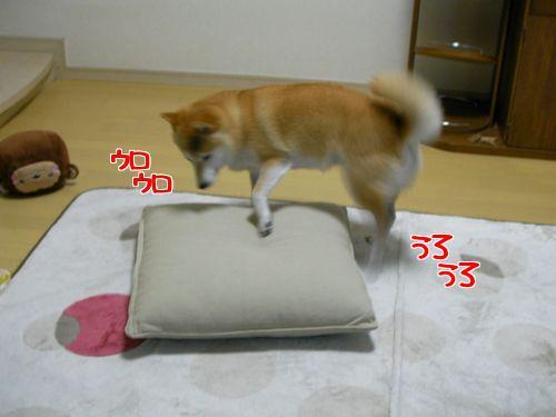 0424おざぶ