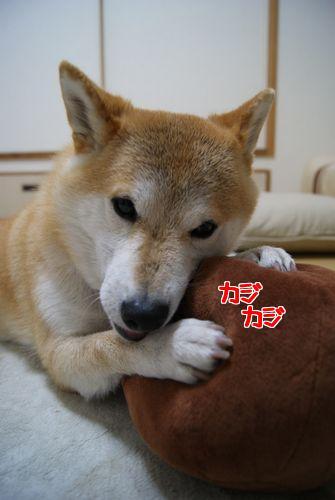 0225もんちゃん (3)