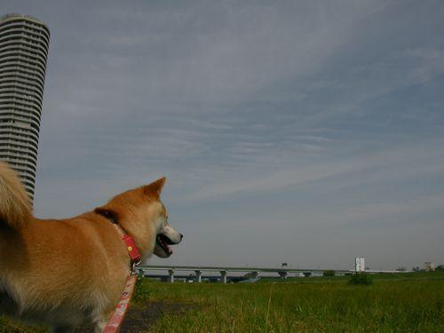 0509母の日散歩 (4)