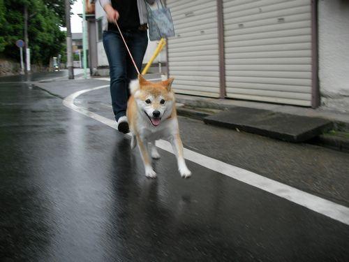 0523雨♪