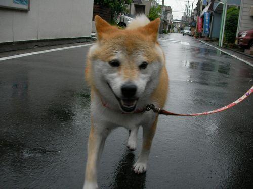 0523雨♪ (2)