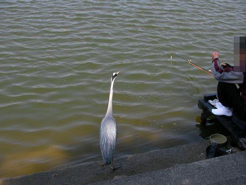 0529魚釣り