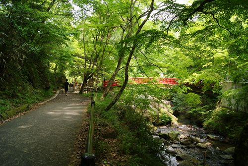 0606森林浴 (3)