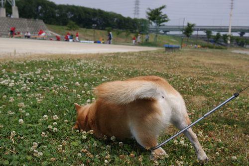 0614広い公園 (4)
