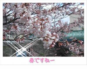 photo_28_20100319223239.jpg