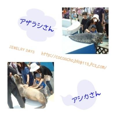 photo_51_20100528231327.jpg