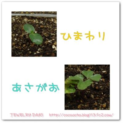 photo_60_20100614221211.jpg