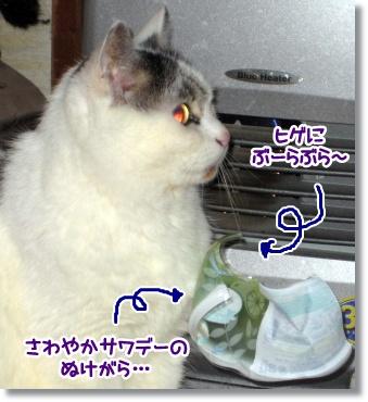 sawayakasawade-1.jpg