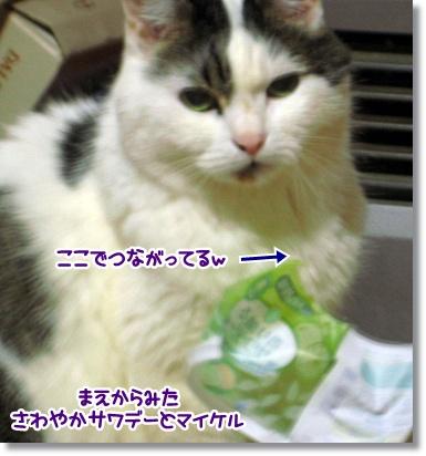 sawayakasawade-2.jpg