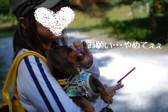 ミロの恥ずかしい写真