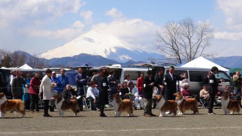 富士山をバックに並ぶコリーたち