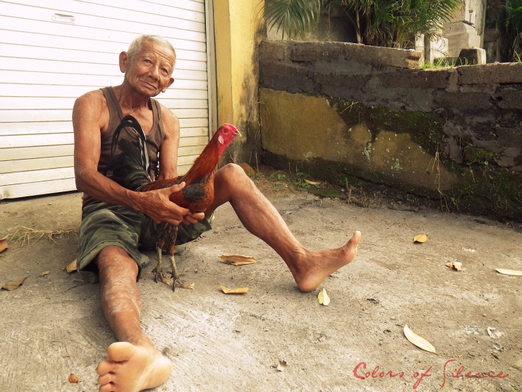 a man and his chicken in ubud