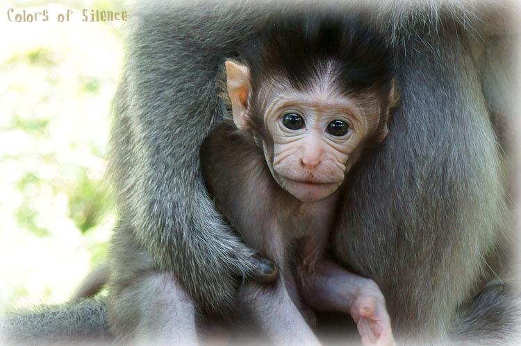 monkey-forest-babymonkey.jpg