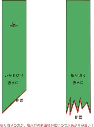 吸水口断面積のコピー
