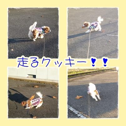 風とともに走るクッキー!!