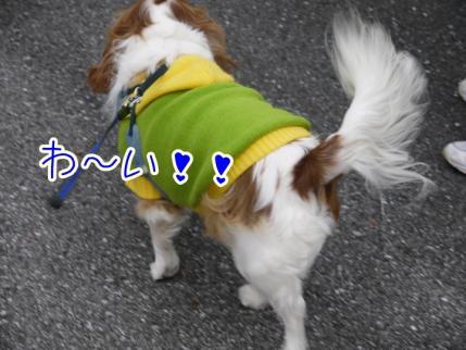 夕方のお散歩にて!!