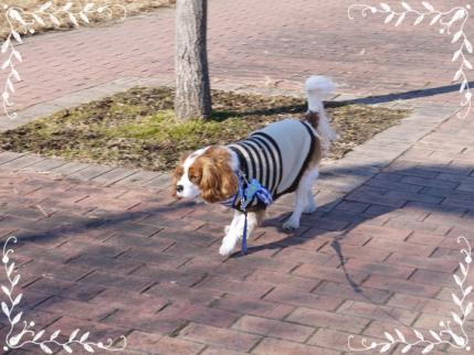お散歩へ!!