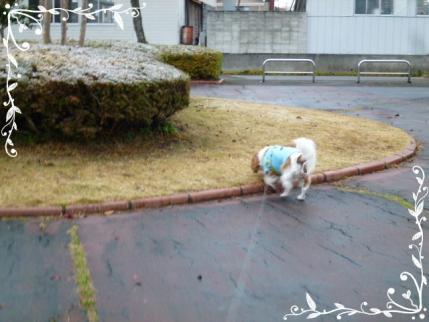 早朝のお散歩にて!!
