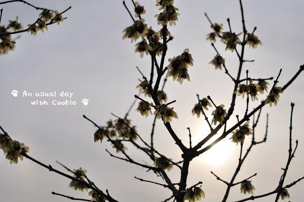 公園の花3_1229