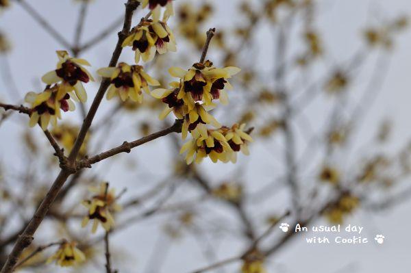 公園の花1_1227