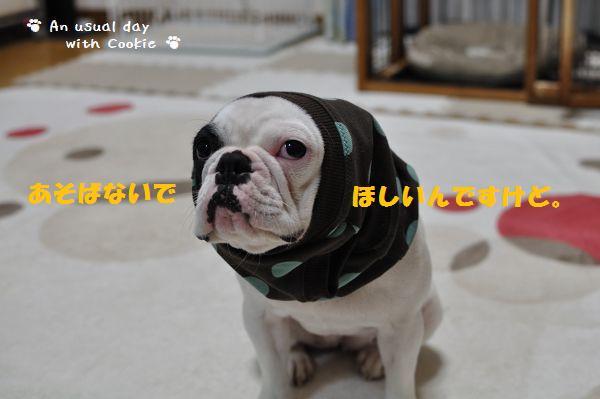 あざらしちゃん3_1446